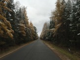 Nearby road through the woods in late Fall